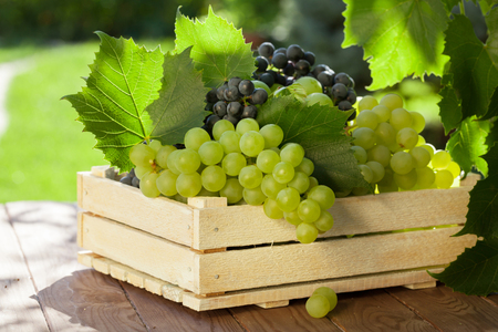 grapes: Vine and bunch of white grapes in wooden box on garden table