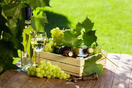 grapes wine: White and red wine bottle, glass, vine and bunch of grapes on garden table Stock Photo