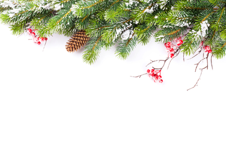 pine green: Christmas tree branch with snow. Isolated on white background with copy space