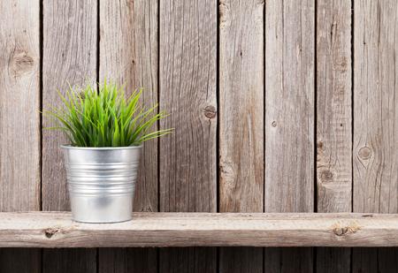 Plant in bloempot op de plank tegen de rustieke houten wand. Weergave met kopie ruimte Stockfoto