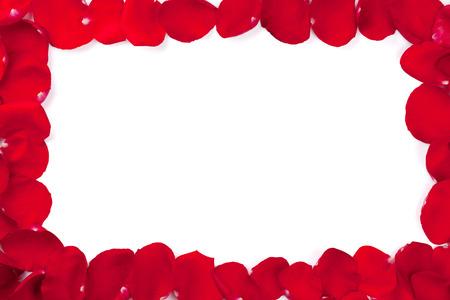 fondo rojo: Marco de los pétalos rosa roja. Aislado en el fondo blanco