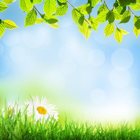 primavera de fondo soleado abstracto con hierba y flores de manzanilla