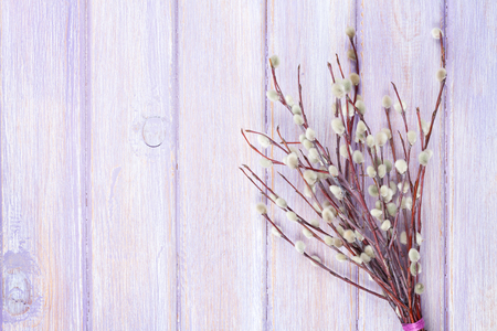 willows: Pussy willow bunch over wooden table background with copy space Stock Photo