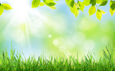 Abstract sunny spring background with grass and leaves Standard-Bild