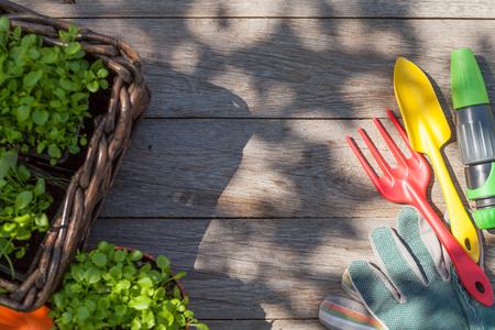 Gartenwerkzeuge und Keimling auf Gartentisch. Ansicht von oben mit Kopie Raum
