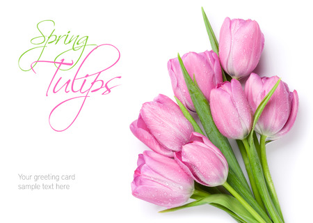 Fresh pink tulip flowers bouquet. Isolated on white background with copy space
