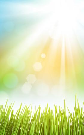 草と空晴れた春の抽象的な背景 写真素材