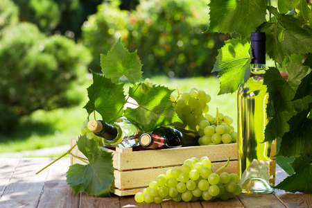 bottle of vine: White and red wine bottle, vine and bunch of grapes on garden table