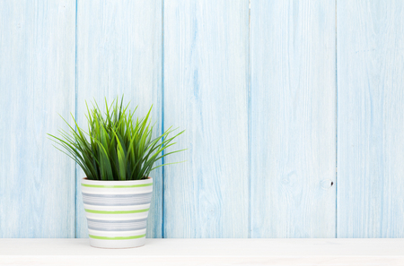 Potted plant on shelf in front of blue wooden wall. View with copy space