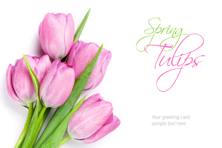 tulip: Świeże różowe tulipany bukiet kwiatów. Pojedynczo na białym tle z miejsca kopiowania
