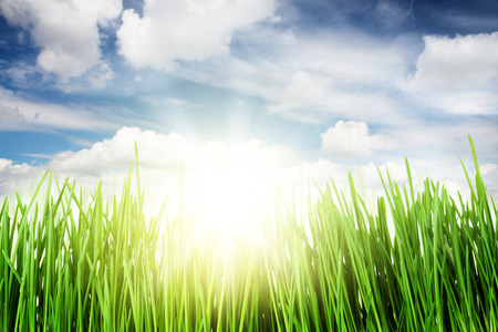 sky sun: Green grass field and blue sky with clouds and bright sun Stock Photo