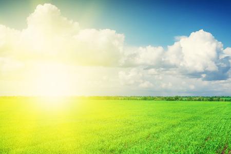 himmel hintergrund: Grüne Wiese und blauer Himmel mit Wolken am Horizont Hintergrund Lizenzfreie Bilder