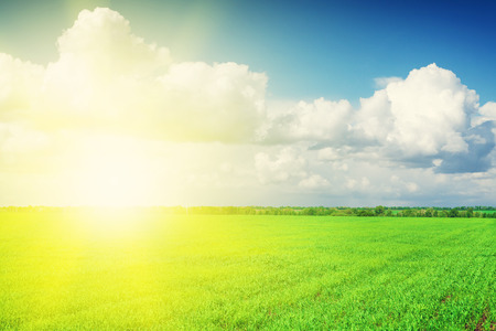 sky background: Green grass field and blue sky with clouds on horizon background