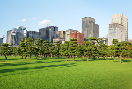Pine trees park in front of skyscrapers of Tokyo, Japan