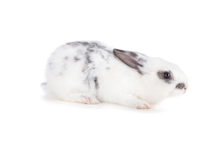 animal ear: Small rabbit. Isolated on white background