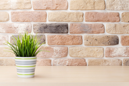 plant in pot: Potted plant on shelf in front of brick wall. View with copy space