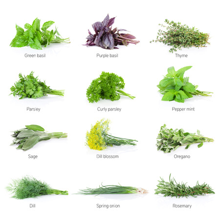 Fresh garden herbs set. Isolated on white background