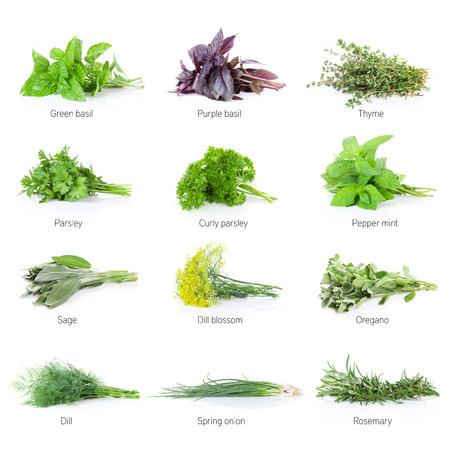 Verse tuinkruiden in te stellen. Geïsoleerd op witte achtergrond Stockfoto