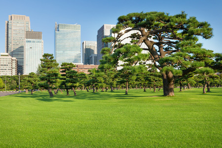 garden city: Pine trees park in front of skyscrapers of Tokio, Japan Stock Photo