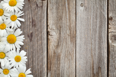 Daisy chamomile flowers on wooden background. Top view with copy space