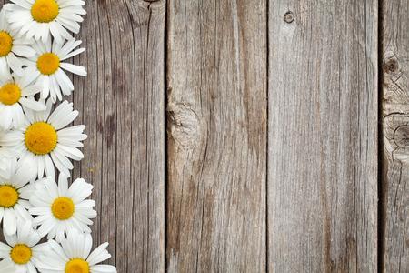 Daisy Kamillenblüten auf Holzuntergrund. Ansicht von oben mit Kopie Raum