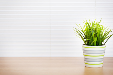 Office workplace with potted plant on wood desk table in front of window with blinds 版權商用圖片 - 59667955
