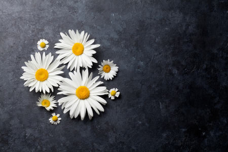 Garden chamomile flowers over stone table background. Backdrop with copy space Imagens
