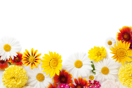 flowers garden: Garden flowers frame. Isolated on white background. Backdrop with copy space Stock Photo