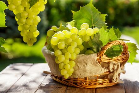 White grapes in basket on garden table Foto de archivo