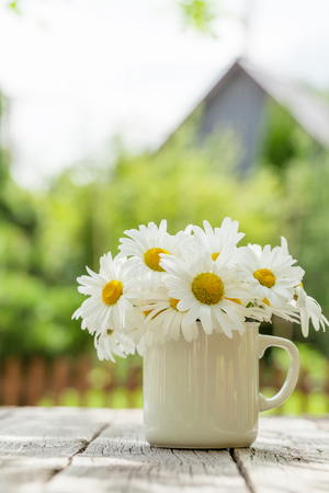 flowers garden: Daisy chamomile flowers on wooden garden table