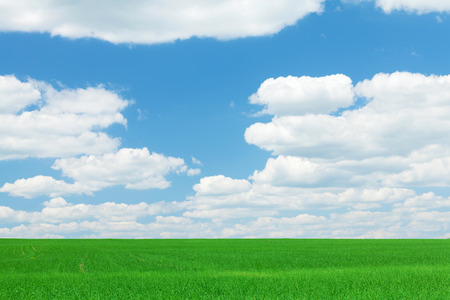 grass and sky: Green grass field and blue sky with clouds on horizon background