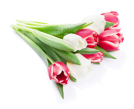 Colorful tulips bouquet. Isolated on white background