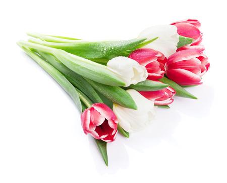 tulipes colorées bouquet. Isolé sur fond blanc