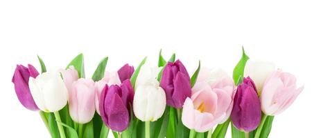 Bunte Tulpen Isoliert auf weißem Hintergrund Standard-Bild - 73358946