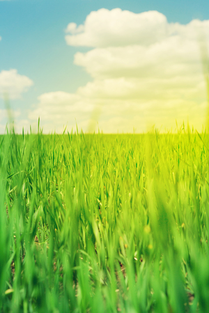 blue green landscape: Green grass field and blue sky with clouds. Summer landscape. Sunny toned Stock Photo