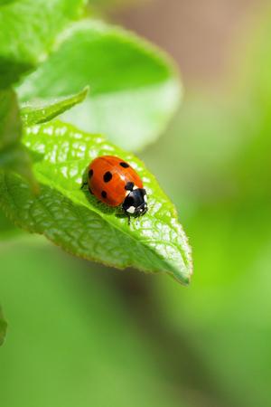정원에서 녹색 잎에 무당 벌레입니다. 사본 공간으로보기 스톡 콘텐츠
