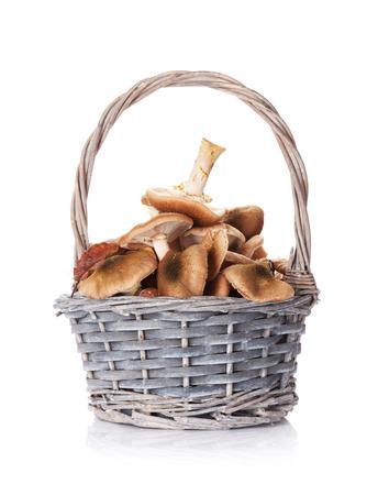 Autumn mushrooms basket. Isolated on white background