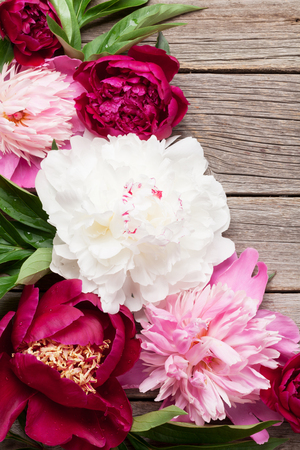 Garden peony flowers on wooden background. Top view with copy space Stock Photo