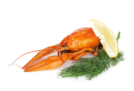 Boiled crayfishes with lemon slice and dill. Isolated on a white background