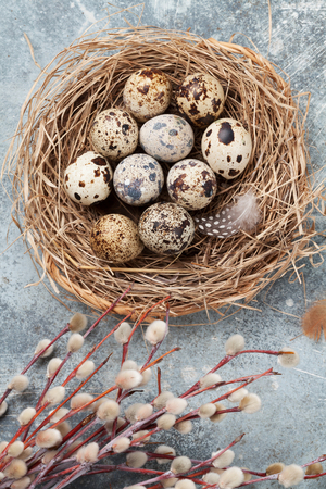 Quails eggs in nest and pussy willow. Easter greeting card. Top view Stock fotó