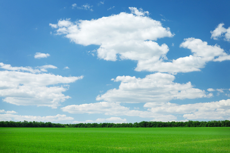 Green grass field and blue sky background
