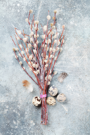 Quails eggs and pussy willow. Easter greeting card. Top view
