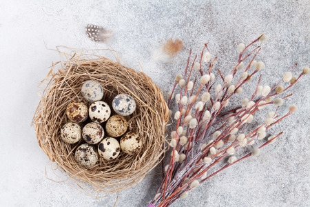 Quails eggs in nest and pussy willow. Easter greeting card. Top view Stock Photo