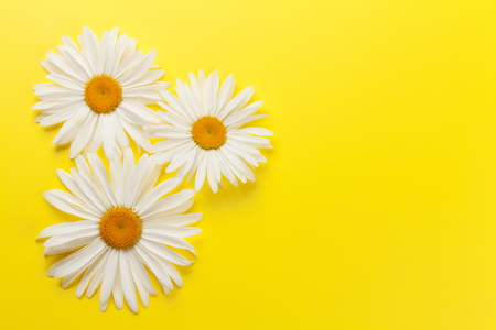 Garden chamomile flowers on yellow background. Top view with copy space Foto de archivo