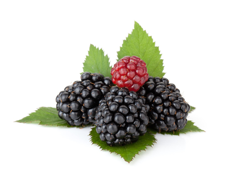 Ripe blackberries with leaves. Isolated on a white background