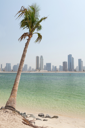 Dubai skyline with small palm in front