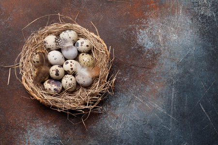 Quails eggs in nest on rustic stone background with copy space