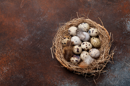 Quails eggs in nest on rustic stone  with copy space