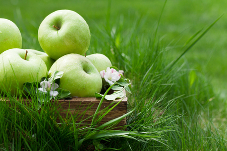 Fresh garden green apples in box. On grass meadow with copy space for your text