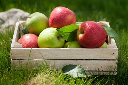 Fresh garden green and red apples in box. On outdoor grass meadow